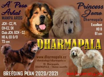 Tibetská doga šteniatka s PP 2020/21 okr