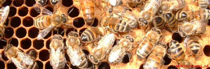 Kupim prezimovana vcelstvá s úľmi aj bez