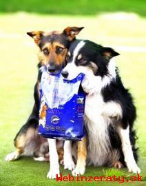 Predaj najzdravších psích krmív na trhu!