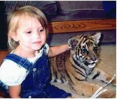 plemena tigrie mláďatá k dispozícii pr