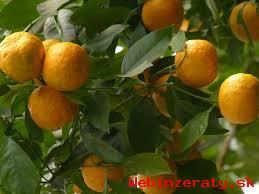 Predaj citrusov