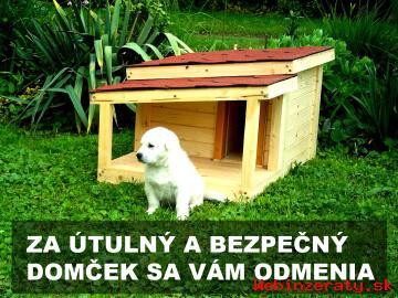 Pes je najlepším priateľom človeka
