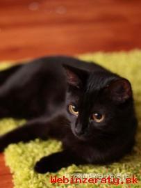 Darujem čiernu mačičku