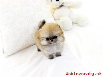 Krásný Muž a žena Pomeranian štěňata
