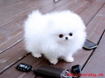 krásna Pomeranian šteňa pre nový domo