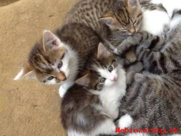 Mačiatka - darujem