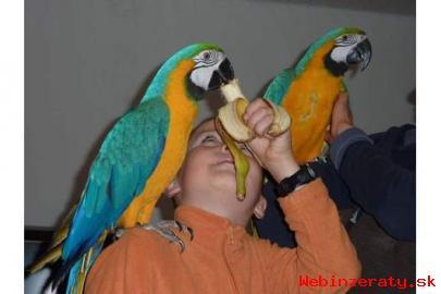 Nabídka Zlaté A Modré Papoušek Pro Prode