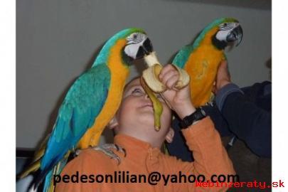 úrodnej papagáj, pštros, kakaa papagáj v
