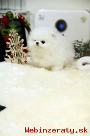 Rozkošný Pomeranian šteňa. .
