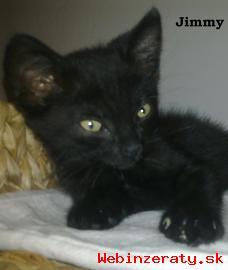 adopcia mačiatok
