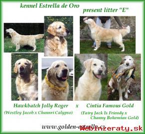 Predám šteniatka - golden retriever