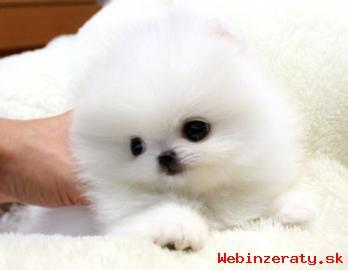 Nádherné a Roztomilé Pomeranian šteňatá