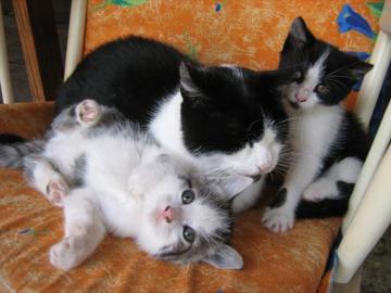 DARUJEM milé mačiatka