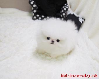 Žena Pomeranian šteňa na predaj