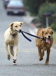 venčenie psov