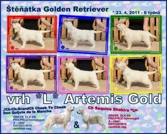 Golden Retriever štěňata s PP