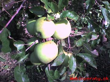 Stopercentne BIO jablká