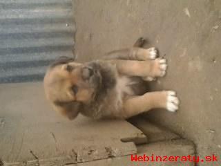 DARUJEM šteniatka