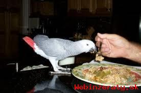Papagáje a Parrot vajcia