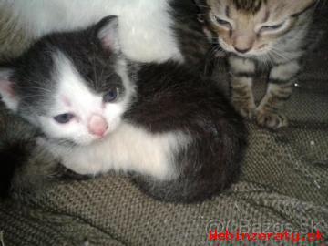 Mačiatka a ich mamička hľadajú súrne dom
