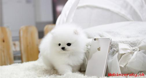 Pomeranian štěňata pro 200eur každý.