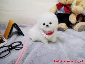 Roztomilý Pomeranian šteňa na predaj