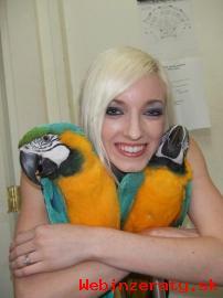 Hovorné pár modrá a zlatá papagáj