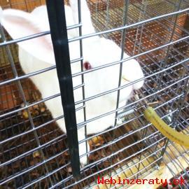 Napajacka napajacky pre zajace kraliky