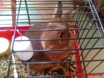 predam zajaca