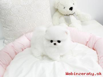 *** Pomeranian hvalpe, mand kvinde, 3 m&