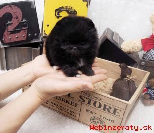 Pomeranian štěňata pro 200 € každý.