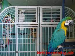Pekné Ara Ararauna papoušek Pro Prodej