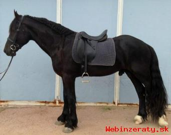 Nádherná frízsky kôň pripravený íst.