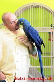 Hovoriaci Papagáj papagáje hyacintu Na