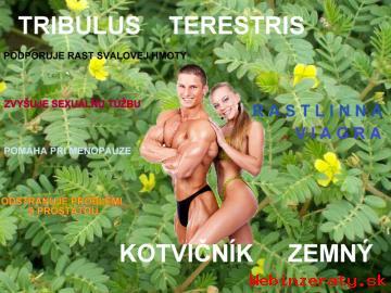 Kotvičník zemný-Tribulus terestris