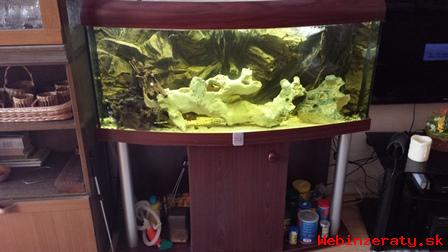 Výhodne predám oblúkové akvárium so stol