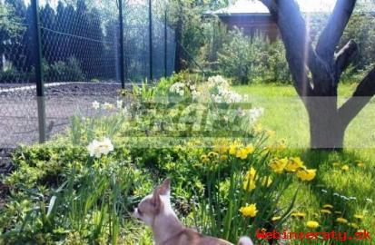 záhrada s chatkou Žabí Majer-Rača