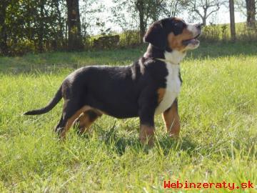 Velký švajčiarsky salašnický pes