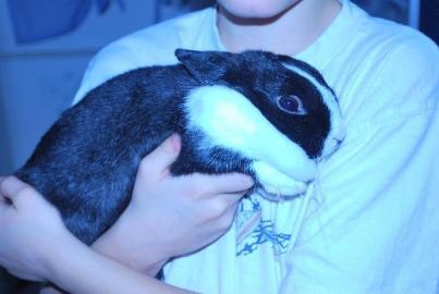 Darujem zakrslého králika