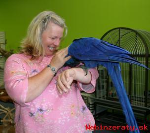 Hyacint Papoušek Papoušci Pro Prodej