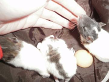 Darujem potkaníkov