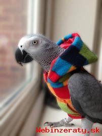Prodám  Zako šedé papoušci