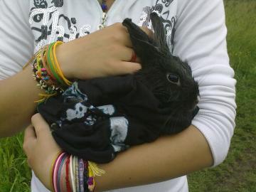 Darujeme králika!