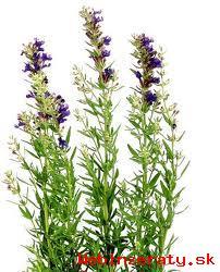 Mimoriadna akcia na liečivé rastliny