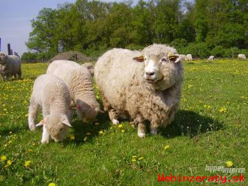 romney marsh kent  jahnence