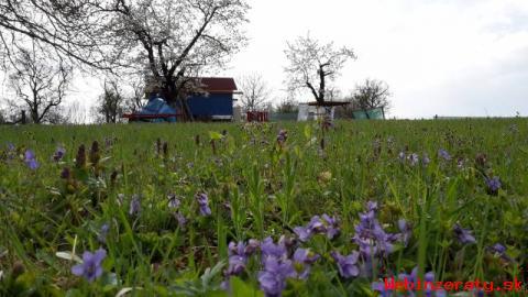 Stavebný pozemok, sad Bukovec pri Myjave