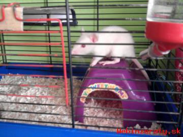 Potkaník so zariadenou klietkou