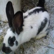 Chliev pre zajace