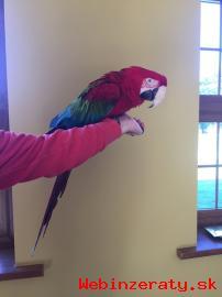 Zdravé Kompletní Tamed papoušci a oplodn