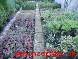 Predaj okrasnych rastlin od 0,20e